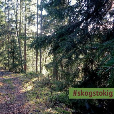 Stig i barrskog, sommar eller höst, i högra hörnet är dekalen #skogstokig inklippt
