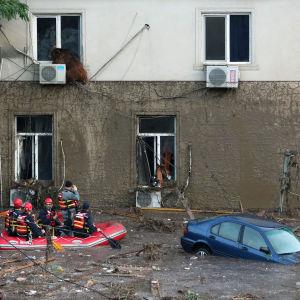 En björn håller sig borta från vattnet på andra våningen i ett översvämmat Tbilisi. Georgien.