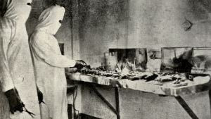 Två personer i skyddsdräkt och ansiktsskydd undersöker råttor under manchuriska pesten 1910