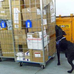 Flygtullens narkotikahund.