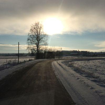 Kuvassa aurinkoinen maisema Konnunsuolta. Keskellä puu, jonka lisäksi tieltä näkyvät Konnunsuon rakennukset.