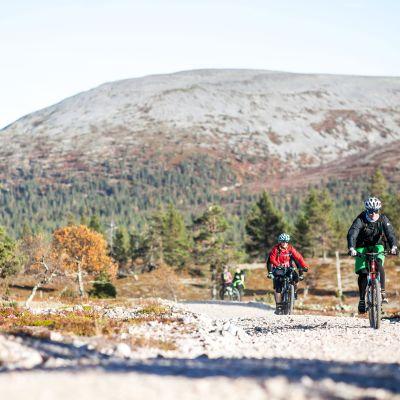 Pyöräilijöitä Pallas-Yllästunturin kansallispuistossa.