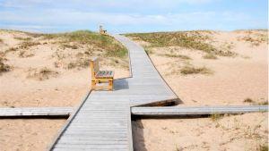 En gångbana i trä på sanddyner.  Också bänkar syns på bilden. Solen skiner.