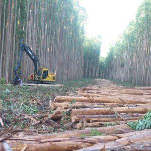 Avverkade träd i en skog i Brasilien.