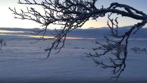 Sista dagen av polarnatten i Polmak, Nuorgam.