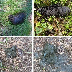 Riitta Sittnikow har hittat dessa spillningar vid sin holme i Porkala och undrar vilket djur hon har som granne på holmen. Är det mårdhund eller kanske  grävling?
