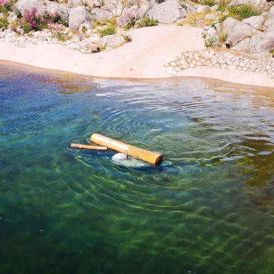 Venus-jääkarhu uiskentelee vedessä helteisenä päivänä.
