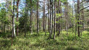 Skyddsområde öster om Gennarbyviken i Raseborg