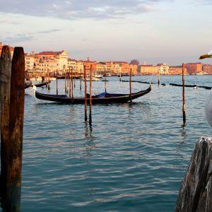 Itävaltalaisessa luontodokumentissa tutustutaan Venetsian luontoon, jota harva pääsee näkemään.