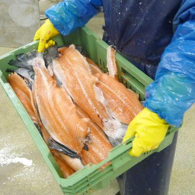 Färdiga fiskfiléer