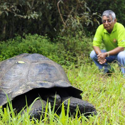 En ny art av jättesköldpadda hittades på Galapagosöarna.