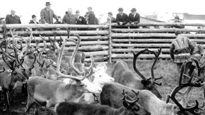 President Urho Kekkonen besöker Lappland på 1960-talet.