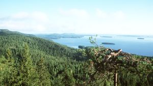 Kolin kansallispuisto