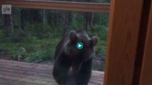 Skärmdump från video av en björn.