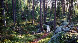 Polku Koloveden kansallispuistossa.