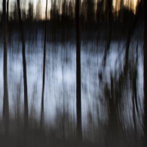 Mörk stämningsbild med träd i dimma.
