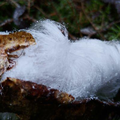 Hiusmaista lunta oksassa.