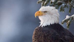 Luontodokumenttisarjassa tutustutaan Alaskaan – erämaahan, jossa olosuhteiden vaihtelu on äärimmäistä.