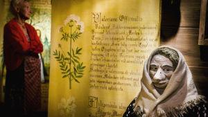 Noitavainomuseossa etualalla nukke, jolla huivi päässä, taustalla tekstattu juliste, jossa valeriaanakasvi ja taustalla taiteilija Stina Engvall.