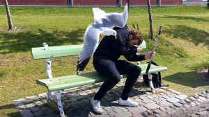 En mås attackerar en skäggig man som sitter på en grön bänk och håller in en selfiepinne.
