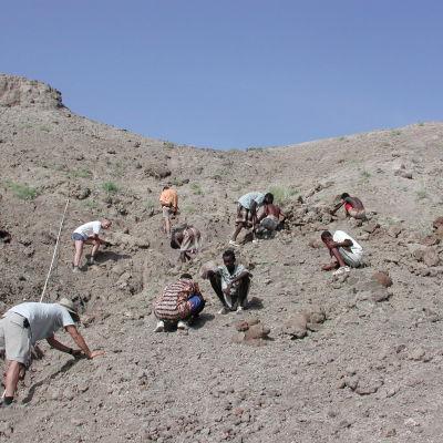 """Arkivbild på arkeologer som undersöker stället där fossilen efter """"Lucy"""" hittades."""