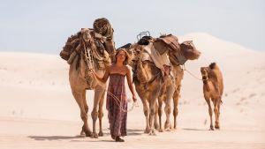 Mia Wasikowska ja kamelit autiomaassa. Kuva elokuvasta Tracks.
