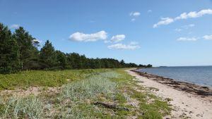 Furuvik strand