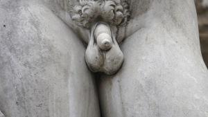 Könsorgan på manlig matmorstaty - David?
