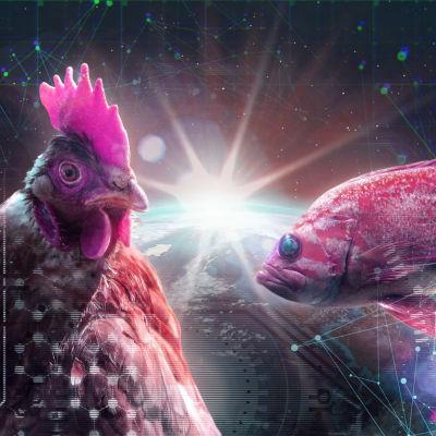 kuvituskuva kanasta ja kalasta