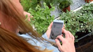 Stella Törnroth tittar ner på närmatsappen på mobilen.