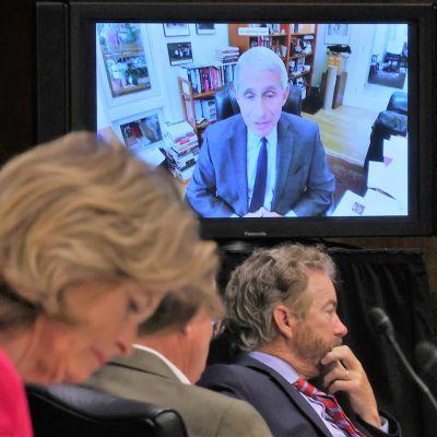 Tohtori Anthony Fauci puhuu videoyhteyden kautta. Senaattorit kuuntelevat.