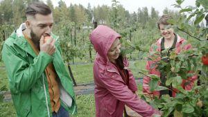 Filip och Linda provsmakar äpplen hos Aitokaris i Pernå.