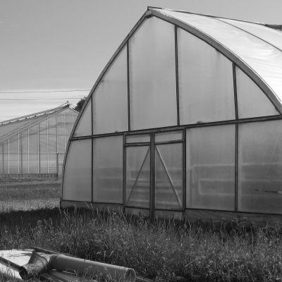 Svartvit bild på växthus
