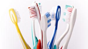 Sju tandborstar i olika färger står i ett tandglas