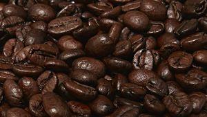 Närbild av kaffebönor. Foto/Bildbanken Mostphotos.