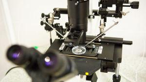 Ett mikroskop och laboratorieutrustning.