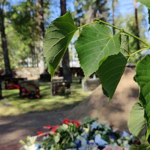 Lehmus kasvaa Lepolan hautausmaalla