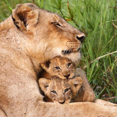 BBC:n uusi luontodokumenttisarja tutustuu erikoisiin emoihin ja verrattomiin vanhempiin.