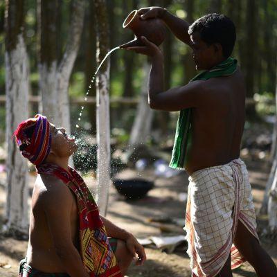 Pappi kaata kannusta riisiolutta tanssijan suuhun Baikho-rituaalissa Kamrupissa Intiassa.
