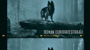 Koira metsässä kaatuneen, lahon puunrungon päällä. Teeman elokuvafestivaalin 2019 juliste.