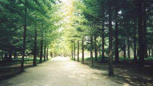 Bild på en skog.
