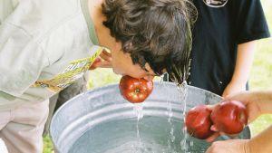 Poika on tarttunut pesusoikossa kelluvaan omenaan hampaillaan