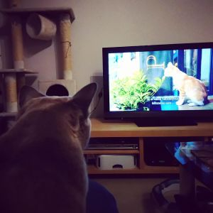 Sohvi-kissa katsoo dokumenttielokuvaa Istanbulin kissat.