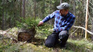 Jussi Saarinen på huk intill en granplanta.