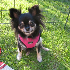 Hjältehunden Lily