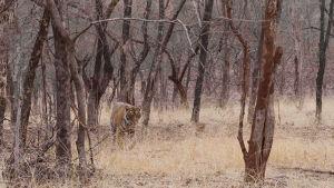 Dokumenttisarja Intiasta ja sen uhanalaisista eläimiistä.