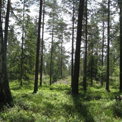 En gles skog i Västerby i Ekenäs