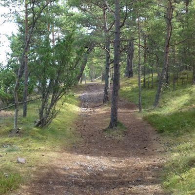En stig som går genom en skog, Tulluddens naturstig i Hangö.