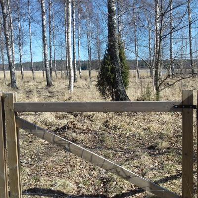 Ett område i Ingå kyrkby som kallas Ingåstrand där det bland annat betar får på somrarna.