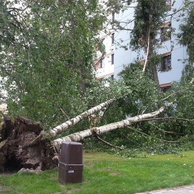 Träd föll i storm i Vasa